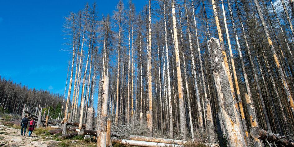 Totholz statt Hochglanz