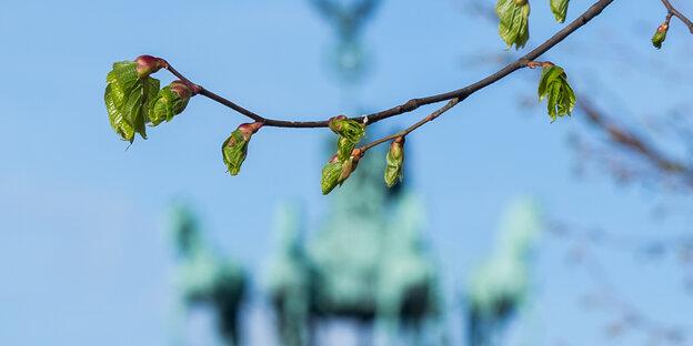 Linde vor Brandenburger Tor