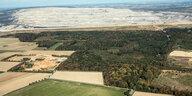 Kohleausstieg und Hambacher Forst: Dem Wald droht ein Inseldasein