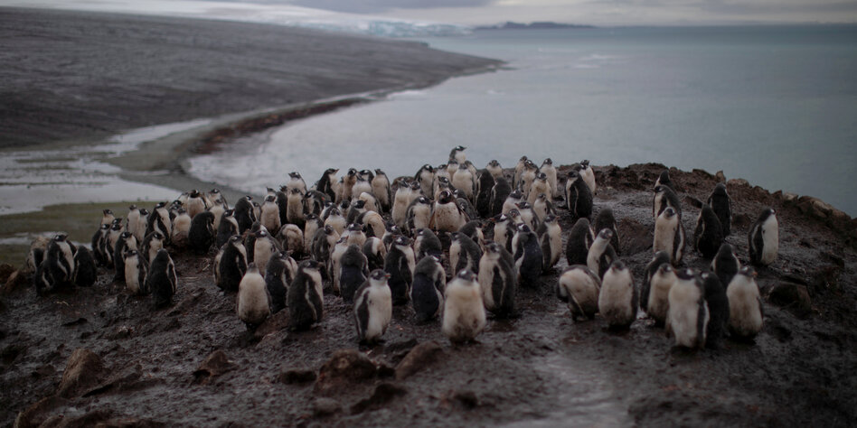 Rekord in der Antarktis: Temperatur über 20 Grad am Südpol gemessen