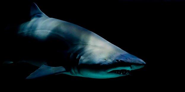 Gentrifizierung in Berlin: Ein Haifisch schwimmt durch ein dunkles Gewässer und sieht dabei im Halbschatten doch etwas gruselig aus