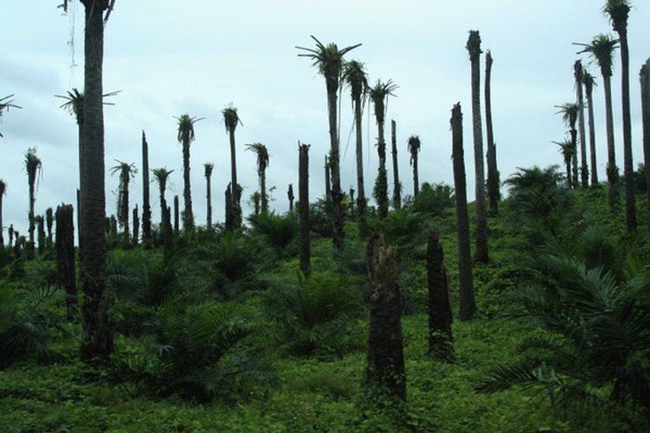 bedrohung für den regewald