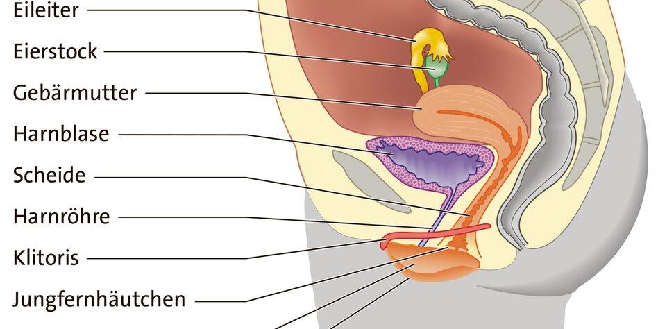 Im schwellkörper knubbel Knubbel im