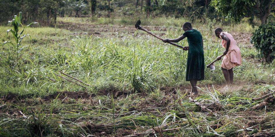 Militarisierter Naturschutz in Afrika: Das koloniale Erbe der Nationalparks