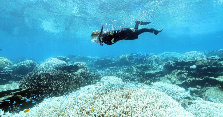 Great Barrier Riff in Gefahr: Totenbleiche vor Australien