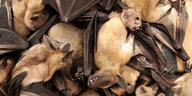 """Biologin über Pandemien: """"Auslöser sind Umweltveränderungen"""""""