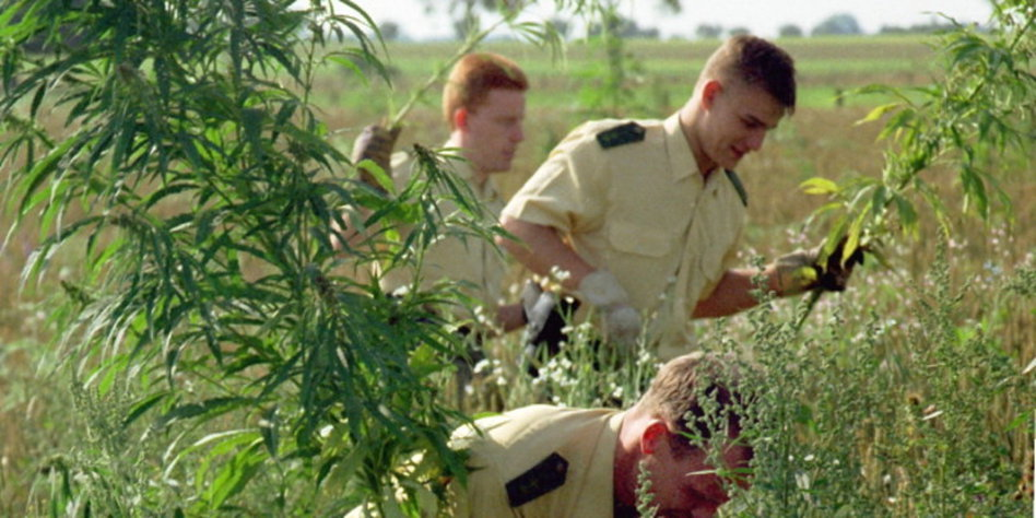 medical marijuana persuasive essay
