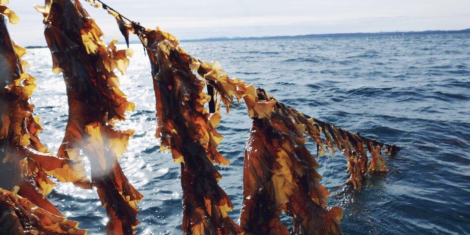 Eine Portion Unterwasserwelt