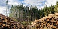 Wissenschaftler schlagen Alarm: Europa verliert Wald