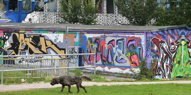 Ein Hund geht am Alten Sportamt vorbei, das derzeit wegen Corona Betriebspause hat