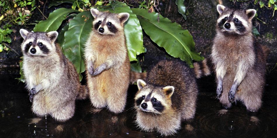 Japanisches Flächenmaß kolumne kreaturen wissenswertes 252 ber waschb 228 ren taz de