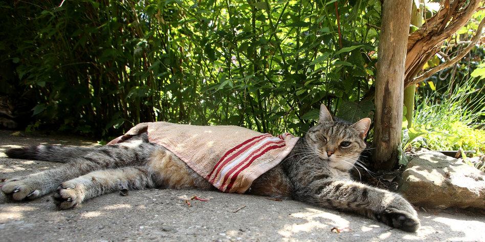 ce4855d3090dc4 Australien will wilde Katzen töten  So ein Katzenjammer - taz.de