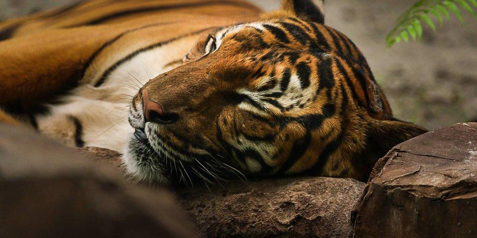 Die Namen Der Tiger Da Waren S Nur Noch Zwei Taz De