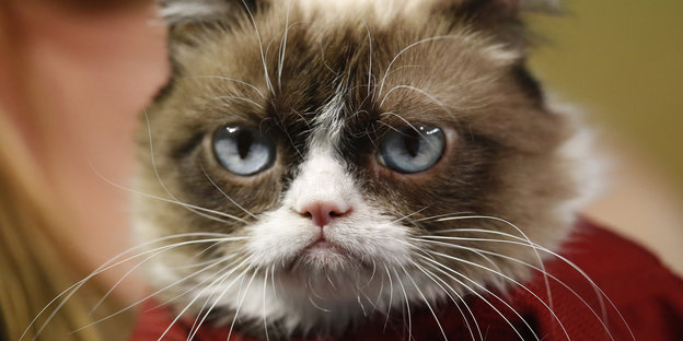 Internet-Star Katze Grumpy Cat