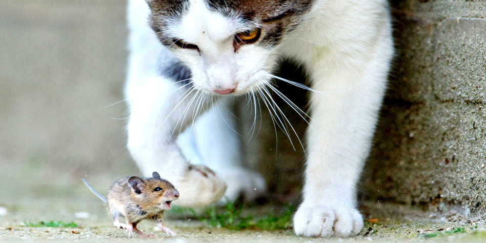 wildernde katzen töten
