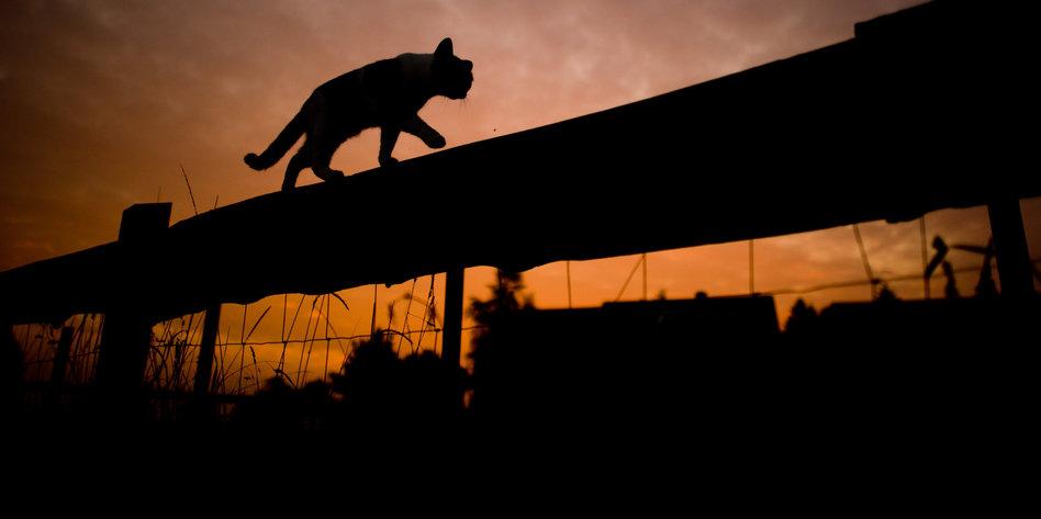 bild katze beim jagen
