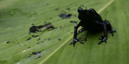 http://www.taz.de/uploads/hp_taz_img/full/10-01-13-EcuadorOil.jpg