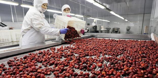 Erdbeeren verarbeitender betrieb in rizhao in china bild dpa
