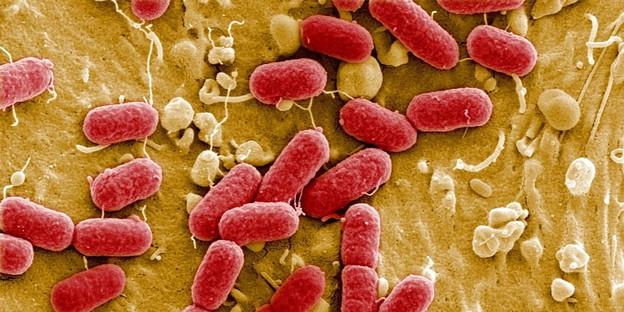 Manchmal mischen sich auch gefährliche bakterien ins mikrobiom. wie