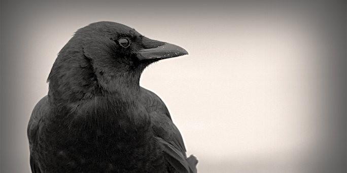 http://www.taz.de/uploads/images/684x342/crow_0921.jpg